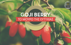 godji-berry_Νηστικό-Αρκούδι-340x215